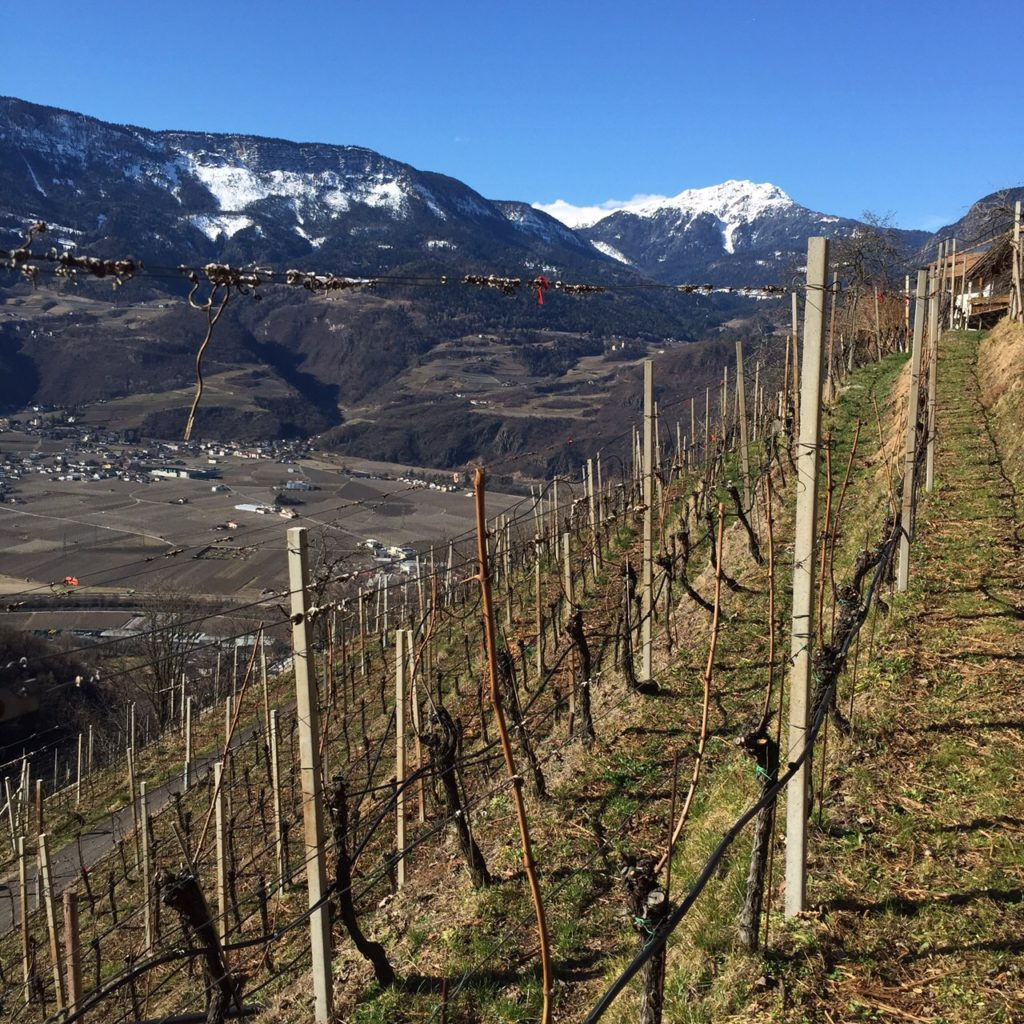 sean-diggins-pic-vorberg-vineyard-above-terlano