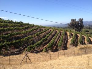 Samantha's Vineyard RRV - text